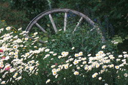 wheel in field