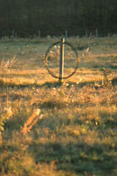 hoop in field