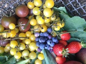 November fruit